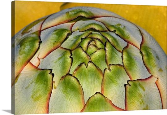 golden lotus banana musella lasiocarpa photo canvas print. Black Bedroom Furniture Sets. Home Design Ideas