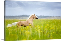 Horse running in field.