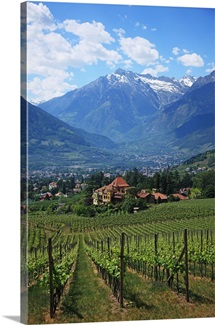 Italy, Alto Adige, South Tyrol, Merano/Meran, vineyard