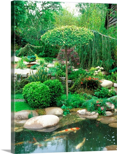 Japanese koi pond surrounded by japanese style planting for Japanese style pond