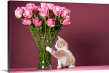 Kitten pawing vase of roses