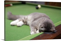 Kitten playing on pool table.