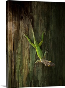 Lizard resting on a tree
