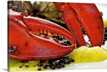 Lobster, caviar and oysters on plate