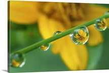 Macro shot of rain drops on a tiny grass with flower reflection in them.
