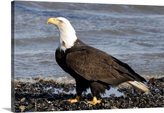 eagle mature singles Search - matchcom.