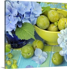 Mophead Hydrangeas (Hydrangea macrophylla) and Bowl of Greengages