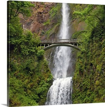Multnomah Waterfall at Oregon. Columbia River Gorge with green lush and footbridge.
