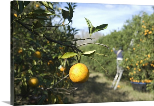 orange grove jewish single men News, weather, traffic, entertainment and sports for the greater los angeles area watch fox 11 news, good day la and studio 11 la for la news, breaking news and.