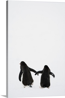 Pair of Gentoo Penguins walking away, Petermann Island, Antarctic Peninsula.