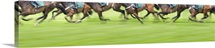 Panorama View of Race Horses