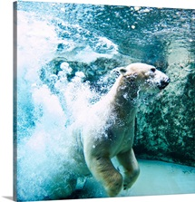 Polar bear underwater.