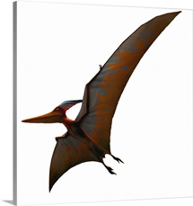 Pteranodon (meaning &amp;#39;winged and toothless&amp;#39;)