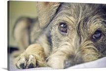 Puppy dog.
