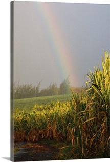 Rainbow arching into field behind stream, Hawaii