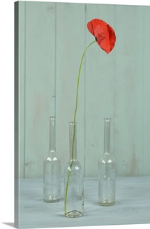 Red poppy in a glass bottle