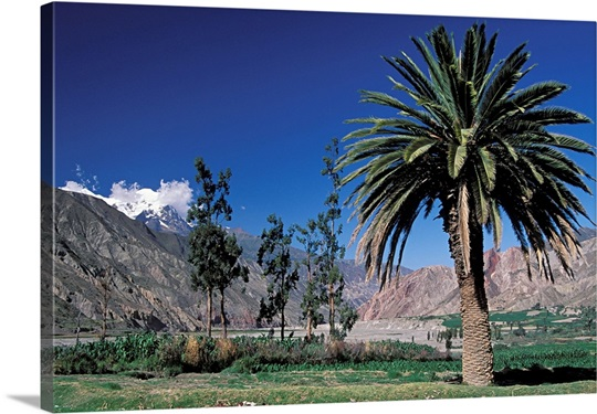 Rio Abajo valley below La Paz with Palmtree. Mount Ilimani in background, Bolivia