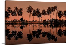 Row of palm trees during sunset at Kumarakom, India.