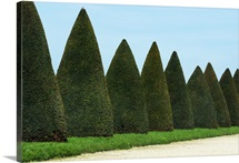 Row of trees in the gardens of Versailles Palace