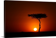 Silhouette of African Landscape Tree at Sunset