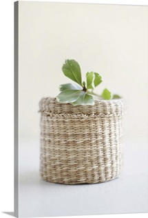 Small basket with a leaf on the top