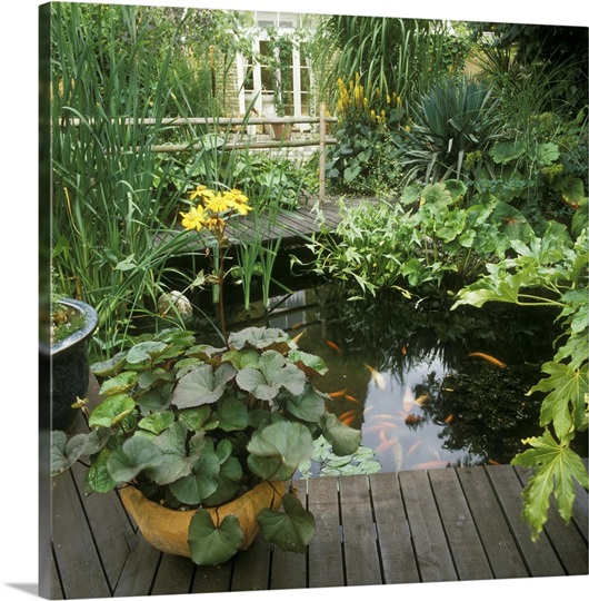 Small goldfish pond - photo#25