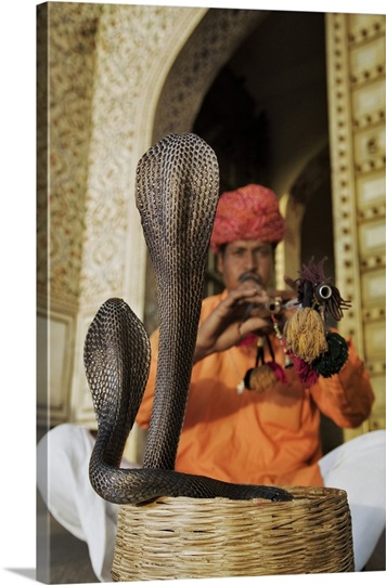 Snake charmer in front of the City Palace Complex in Jaipur. India