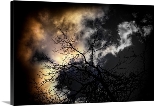 Spooky tree branches against storm sky at night