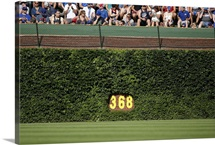The ivy covered outfield wall and 368-foot sign at Wrigley Field, Chicago, Illinois