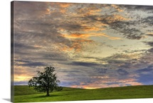 The lone field tree in a rural field during a beautiful summer sunset