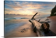 Tree log on beach at sunrise in Kauai.