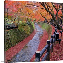 Trees with autumn colors along bending river in Kyoto with red leaves