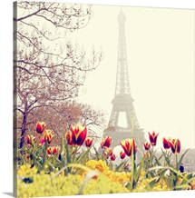 Tulips flowers with Eiffel Tower background, Paris, France