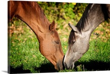 Two horses touching noses.