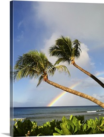 Two palm trees on beach and rainbow over sea in background at Hawaii.