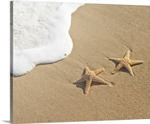 Two sea stars on sand by water