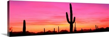 USA, Arizona, Organ Pipe National Monument, sunset