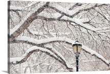 USA, New York, New York City, Snow covered tree branches and lamp post