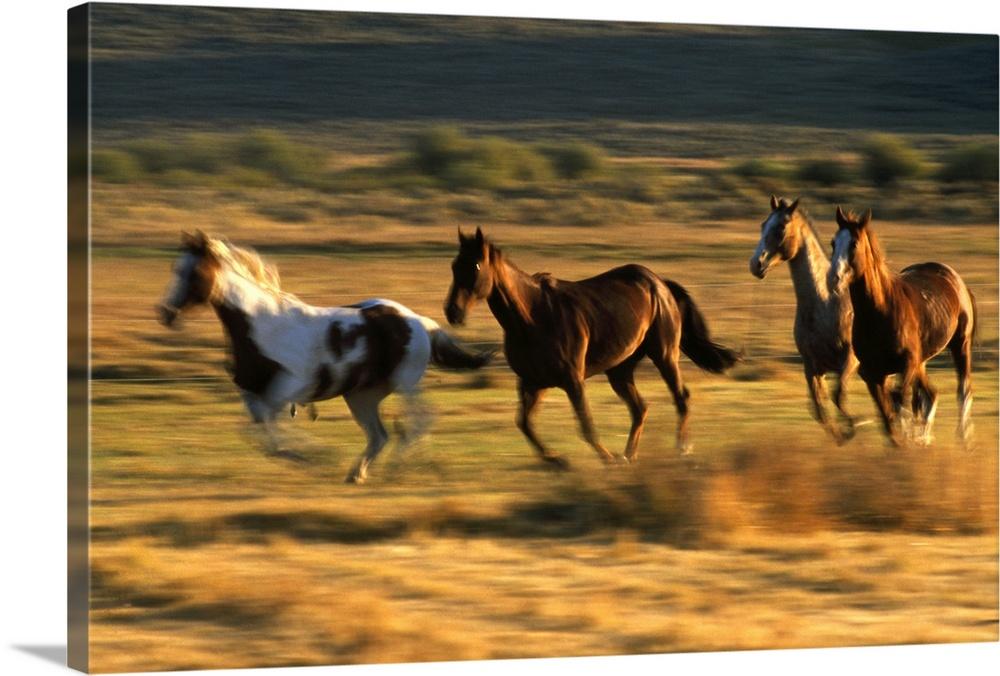 Premium Thick-Wrap Canvas Wall Art entitled Wild horses ...