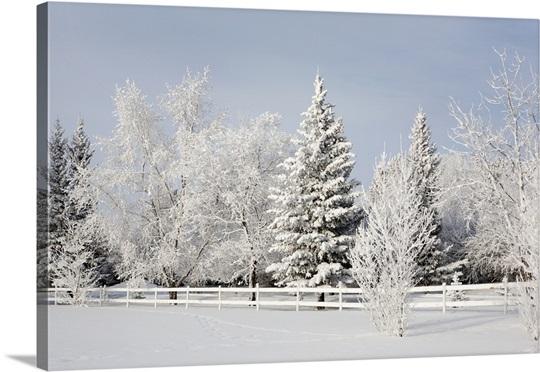 Winter Landscape Calgary Alberta Canada Photo Canvas