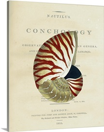Conchology Nautilus