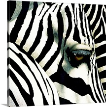 Do Zebras Dream in Color