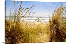 Dune Grass III