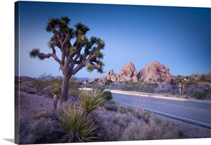 joshua tree national park big and beautiful singles He saw a photo of a beautiful woman at a to vacation at joshua tree national monument us national park service, and relocated to the joshua.