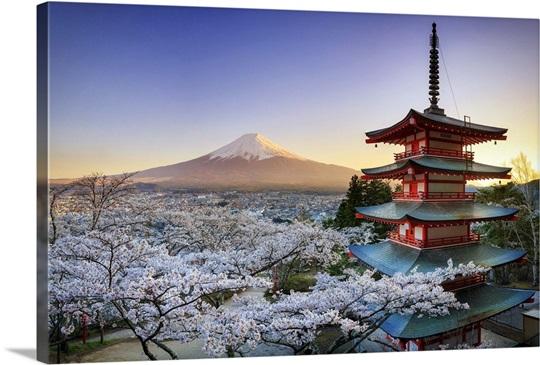 Japan Yamanashi Prefecture Fuji Yoshida Chureito Pagoda Mt Fuji And Cherry Blossoms Photo