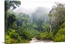 Mist and river through tropical rainforest, Sabah, Borneo, Malaysia