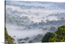 Mist, over tropical rainforest, early morning, Sabah, Borneo, Malaysia