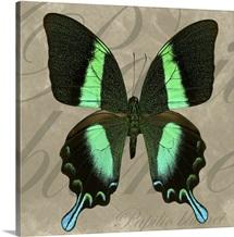 Green Mountain Swallowtail