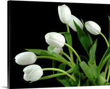 White Tulip 4