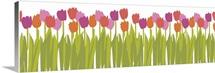 Tulips horizontal